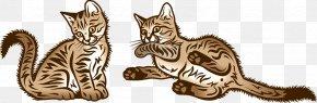Kitten - Kitten Tabby Cat Wildcat Whiskers PNG
