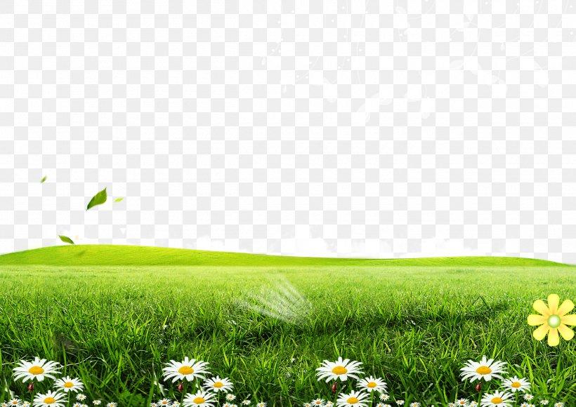 green lawn poster wallpaper png 2500x1770px green field flora flower grass download free green lawn poster wallpaper png