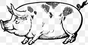 Creative Lace - Pig Drawing Made Easy: A Helpful Book For Young Artists; The Way To Begin And Finish Your Sketches Clearly Shown Step By Step Line Art Clip Art PNG