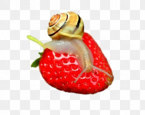 On Snail Strawberry - Snail Slime Gastropod Shell Fruit Mollusc Shell PNG