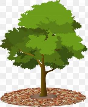 Tree - Tree Canopy Urban Forest Woody Plant PNG