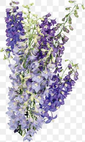 English Lavender مركز الأمير محمد بن نايف للمناصحة المحكمة العليا هلال رمضان Nosegay PNG