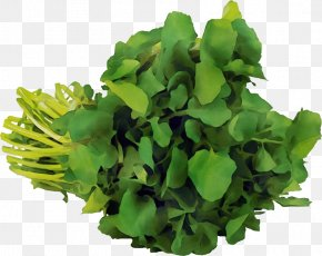 Vegetable Herb - Green Leaf Flower Plant Grass PNG