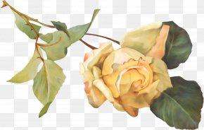 Flower - Garden Roses Petal Flower Clip Art PNG