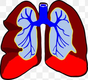 Small Lungs Cliparts - Lung Breathing Clip Art PNG