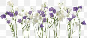 Flower Edge - Wedding Invitation Borders And Frames Flower Picture Frames PNG