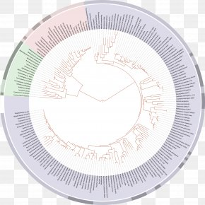 Tree Of Life - On The Origin Of Species Tree Of Life Phylogenetic Tree Evolution Biology PNG