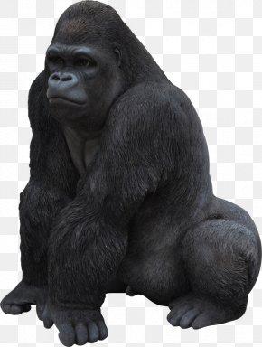 Monkey - Chimpanzee Primate Western Gorilla Ape Garden Ornament PNG
