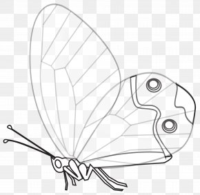 Line Art - Papillon Dog Butterfly Line Art Black And White Drawing PNG