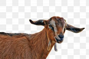 Ear Feral Goat - Goat Goats Goat-antelope Cow-goat Family Horn PNG