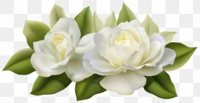 Beautiful White Roses With Leaves Image - Flower Jasmine White Rose PNG