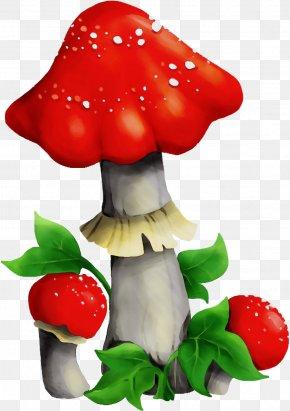 Edible Mushroom Plant - Mushroom Agaric Agaricomycetes Fungus Medicinal Mushroom PNG