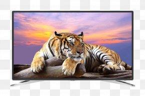 Tiger - Tiger Wildlife Royalty-free Wallpaper PNG