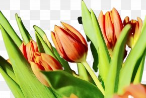 Lily Family Flower Arranging - Lily Flower Cartoon PNG