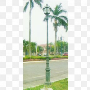 Street Light - Street Light Utility Pole Lamp Asian Palmyra Palm PNG