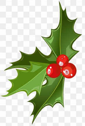 Christmas Mistletoe Picture - Christmas Mistletoe Common Holly Clip Art PNG