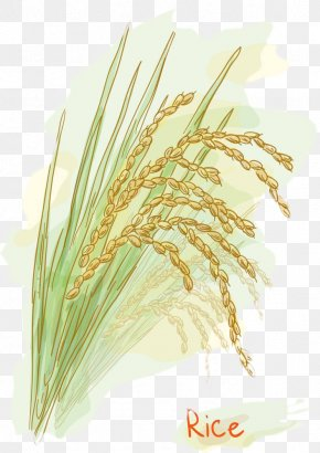 Rice Seed Vector Picture - Rice Stock Photography Watercolor Painting Clip Art PNG