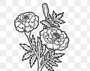 Flower - Mexican Marigold Drawing PNG