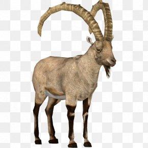 Goat - Goat Argali Barbary Sheep Alpine Ibex PNG