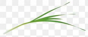 Leaf - Leaf Green Grasses Plant Stem PNG