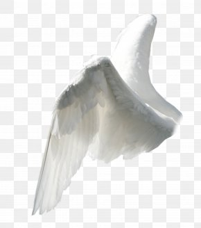 Wing - Angel Wing Clip Art PNG
