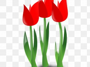 Lily Family Coquelicot - Background Family Day PNG
