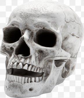 Scary Skeleton - Skull Skeleton PNG