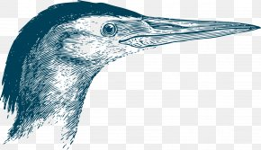 The Beak Of The Wild Goose - Goose Beak Bird Swallow PNG