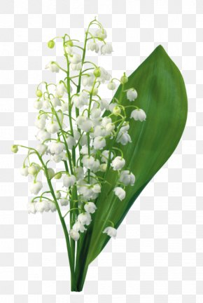 Lily Of The Valley - Lily Of The Valley Flower 1 May PNG