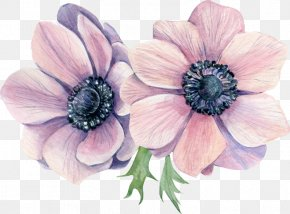 Flower - Anemone Watercolor Painting Stock Illustration Flower PNG
