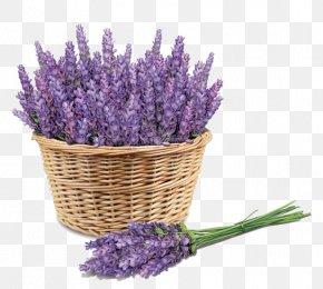 Purple Lavender - Sunscreen Lavender Face Skin Price PNG