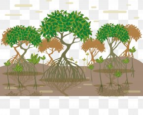 Tree Root Vector - Tropical And Subtropical Moist Broadleaf Forests Mangrove Euclidean Vector Tree PNG