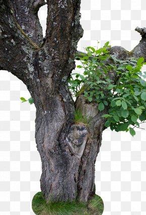 Trees - Tree Stock DeviantArt PNG
