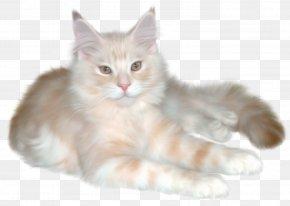 Cat Claw - Persian Cat Kitten Ragdoll Clip Art PNG