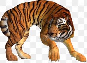 Tiger - Tiger Lion Leopard Cat PNG