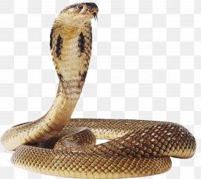 Snake Image - Snake Green Anaconda PNG