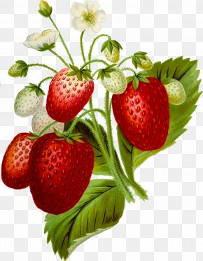 Strawberry - Strawberry Cream Cake Food Clip Art PNG