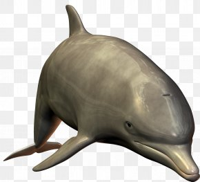 Dolphin Image - Bottlenose Dolphin PNG