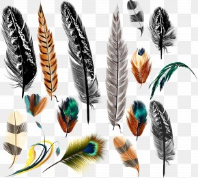 Vector Feather - Bird Feather Euclidean Vector Drawing PNG