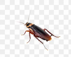 Cockroach - Insect Cockroach Mosquito Pest Control Bed Bug PNG