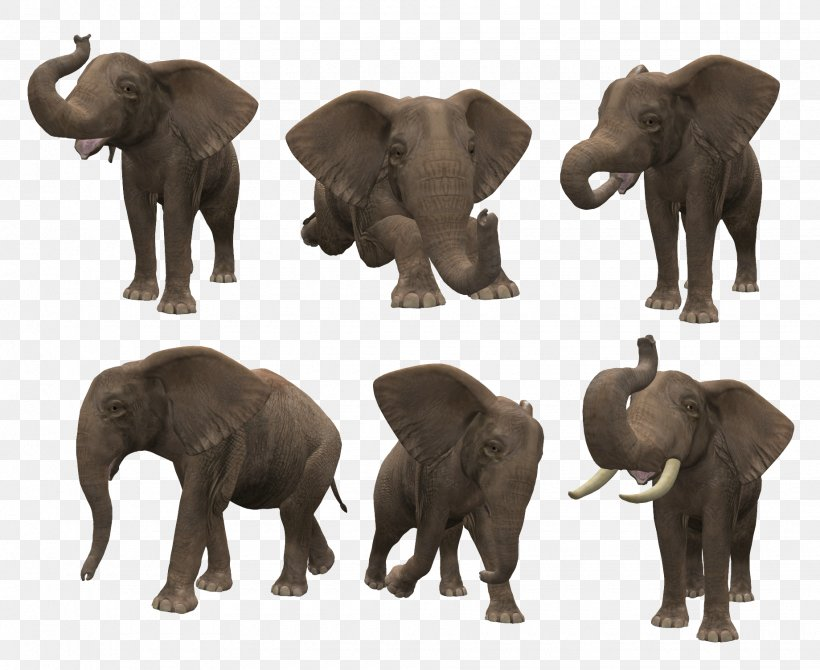 Powerful burly african elephant family transparent background PNG clipart |  HiClipart