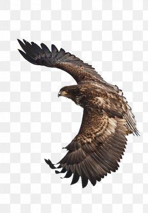 Eagle - White-tailed Eagle Bird Steppe Eagle Flight PNG