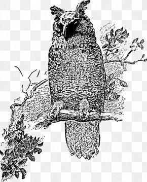 Owl - Great Horned Owl Bird Barred Owl Clip Art PNG