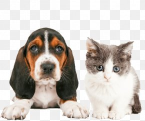 Cat - Cat People And Dog People Cat People And Dog People Pet Sitting Puppy PNG