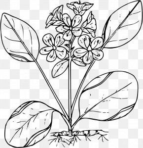 Spring Illustration - Flower Floral Design Black And White PNG