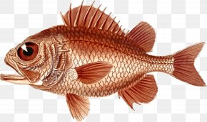 Poisson Cardinal - Northern Red Snapper Clip Art Openclipart Image Drawing PNG
