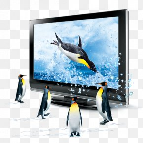 TV Penguins - 3D Television 3D Computer Graphics Icon PNG