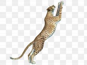 Free Cheetah Pull Swoop - Cheetah Leopard Felinae PNG