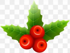 Mistletoe Clip Art Image - Mistletoe Christmas Clip Art PNG