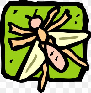 Insect - Insect Drawing Clip Art PNG